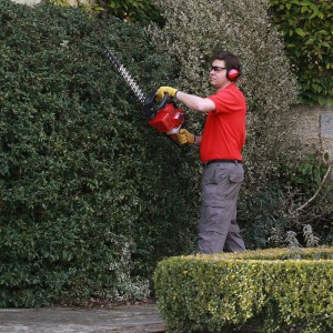 Tree & Hedge Cutting